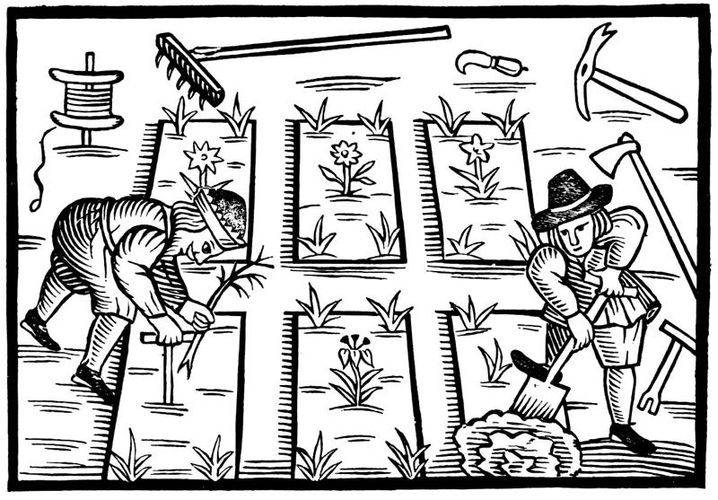 trericeplanting